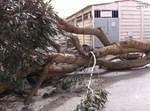 עצים, קרסו, מזג אוויר