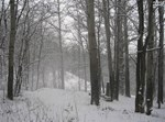השלג האוקראיני, אתמול