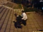 מעצר, פוניבז, גרוסמן