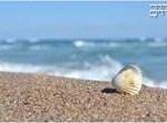 """""""Shell"""" by usamedeniz"""