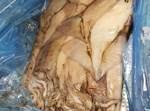 דגי הים הטרפים שנמצאו הבוקר (באדיבות המצלם)