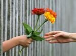 פרחים. אילוסטרציה