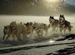 כלב, כלבים, נשיכה