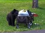 דוב בקעמפ