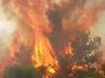 שריפת ענק בגן לאומי צור נתן