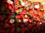 תותים מעזה שנתפסו במחנה יהודה