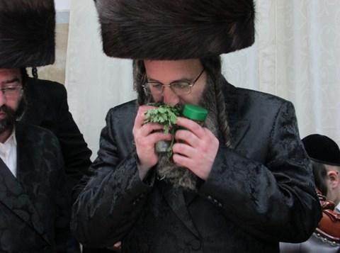 הרבי מזוטשקא אמסנא במוצאי שבת