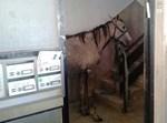 הסוסים בחדר המדרגות
