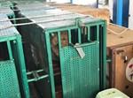 כ-50 בעלי חיים חולצו מרצועת עזה