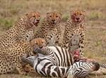 חיות פרא ועופות במאסי מארה - קניה