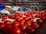 תיעוד מתוך מפעל לייצר רסק עגבניות בעזה