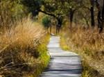 מסלול הליכה