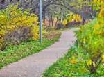 תיעוד מרהיב מסתיו הזהב בפארק סקולניקי ברוסיה