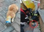 לוחמי האש מחלצים את החתול