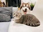 חתול וכלב