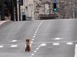 כלב בירושלים