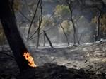 שריפת יער