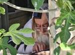 הרבי מתולדות אהרן במירון