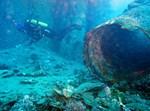 האלמוגים שנפגעו מעבודות התשתית