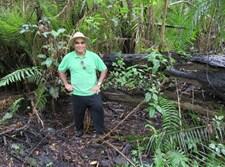 כרמלי ביערות הגשם