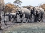 חיות בטבע בטנזניה