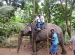 יצחק כרמלי על הפיל