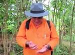 כרמלי ליד עצי הקפה