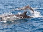 הדולפינים שתועדו