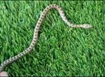 הנחש בחצר הבית