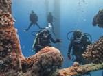 השמירה על שוניות האלמוגים באילת