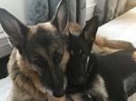 הכלבים של בני הזוג ביידן