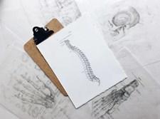 חוליות שדרה