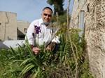 יצחק כרמלי עם הצמח