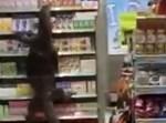 הלטאה בחנות