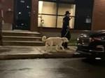 חסיד מטייל עם כלב אמש בקנדה