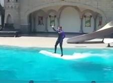 הופעת הדולפינים