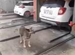 הכלב שנעמד בתוך המכונה