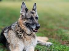 הכלב של ביידן