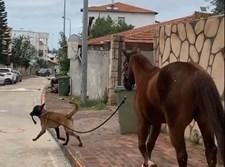 הכלב מוביל את הסוס