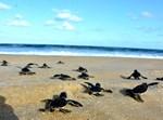 צבי הים הקטנים
