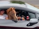 הסייח מוציא את ראשו מהמכונית