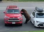 הדב נכנס למכונית