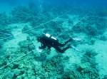 שונית האלמוגים באילת