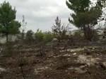 העצים שנותרו מהשריפה