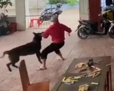 הכלב מתנפל על האיש עם המקל