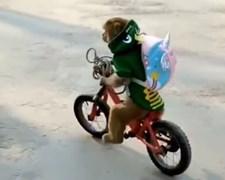 הקוף רוכב על האופניים