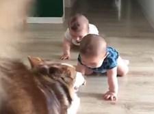 התינוקות צוחקים מהכלב