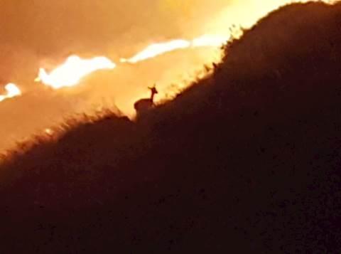 הצביה שנלכדה בשריפה