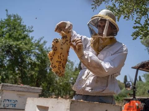 כוורות דבורים באזור צריפין