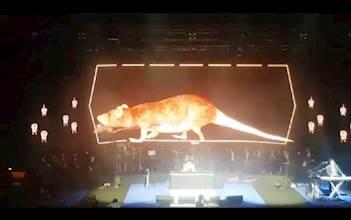 העכברים במופע ישיבשיר